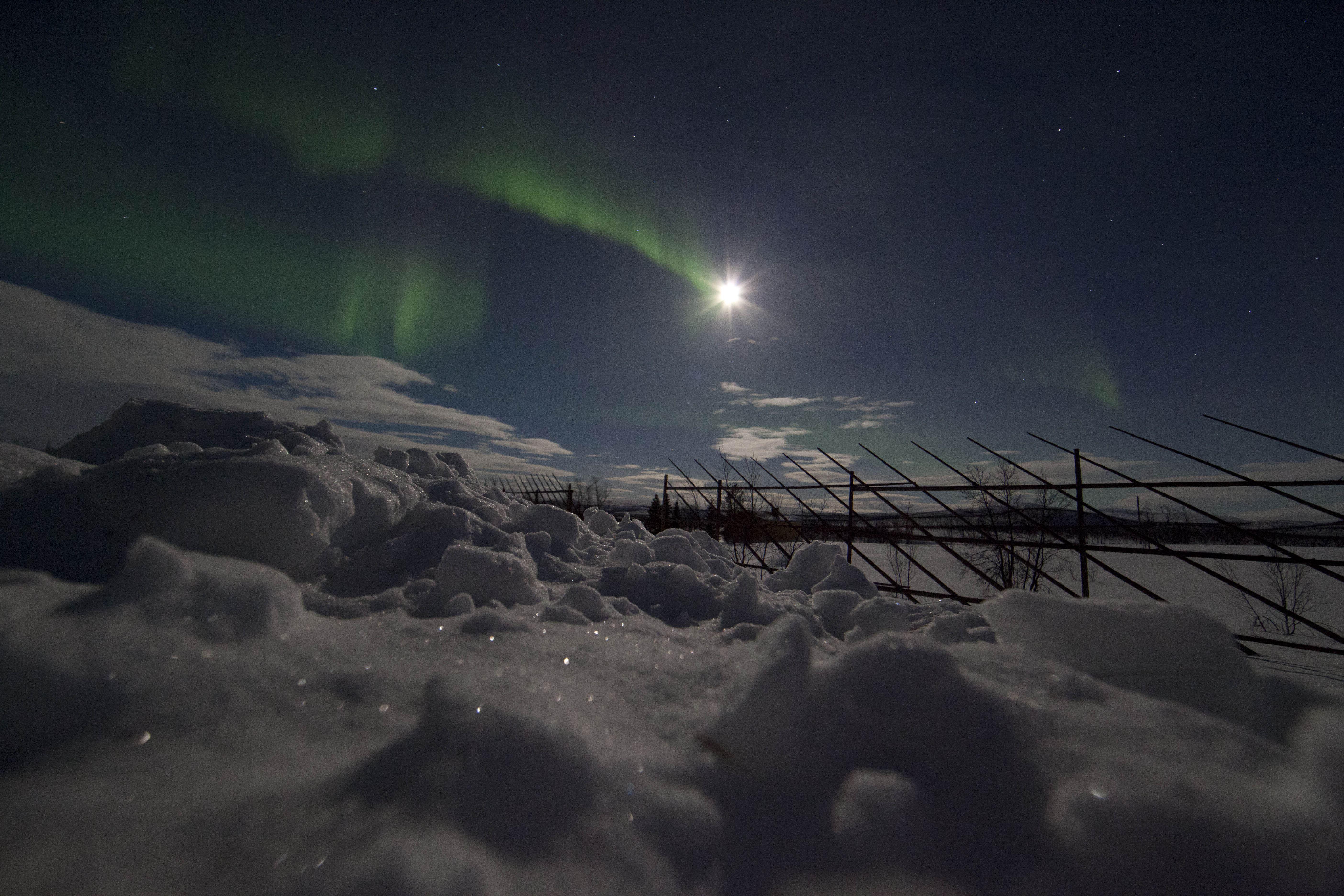 Nordlys med Peter - Roy Sætre Arctic Trip