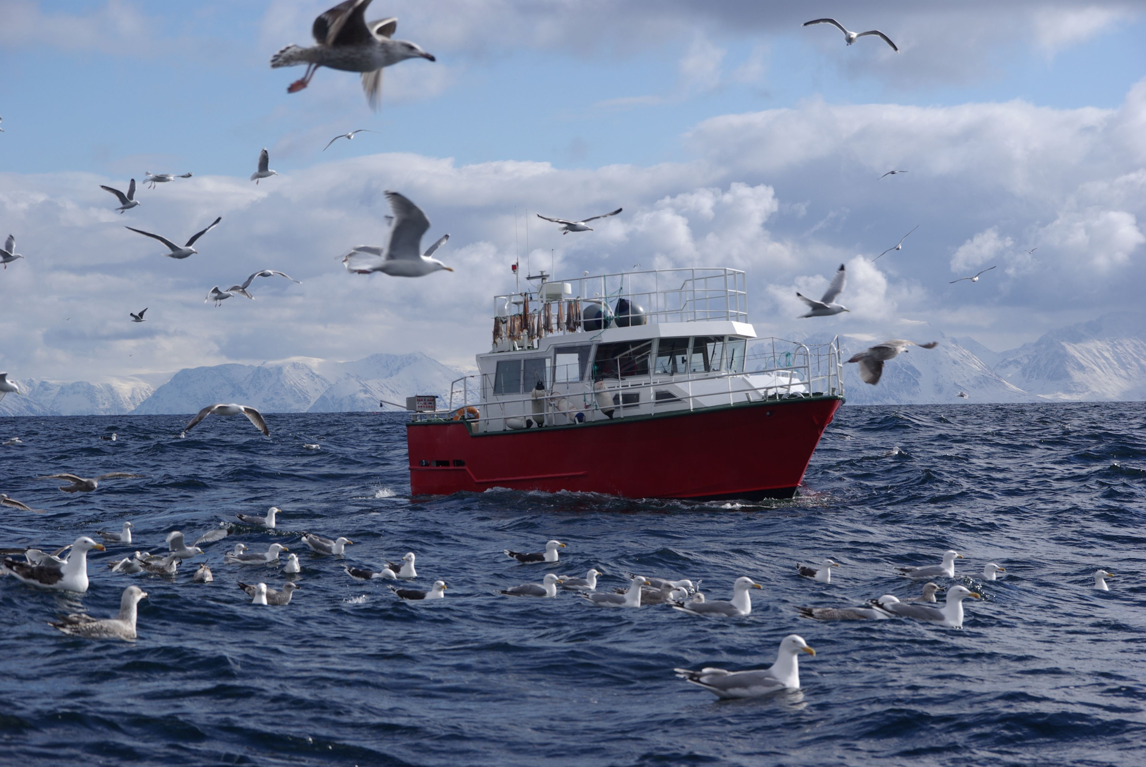 Exciting fjordcruise and fishing trip with MS Senjafjell - Solbø Maritime AS