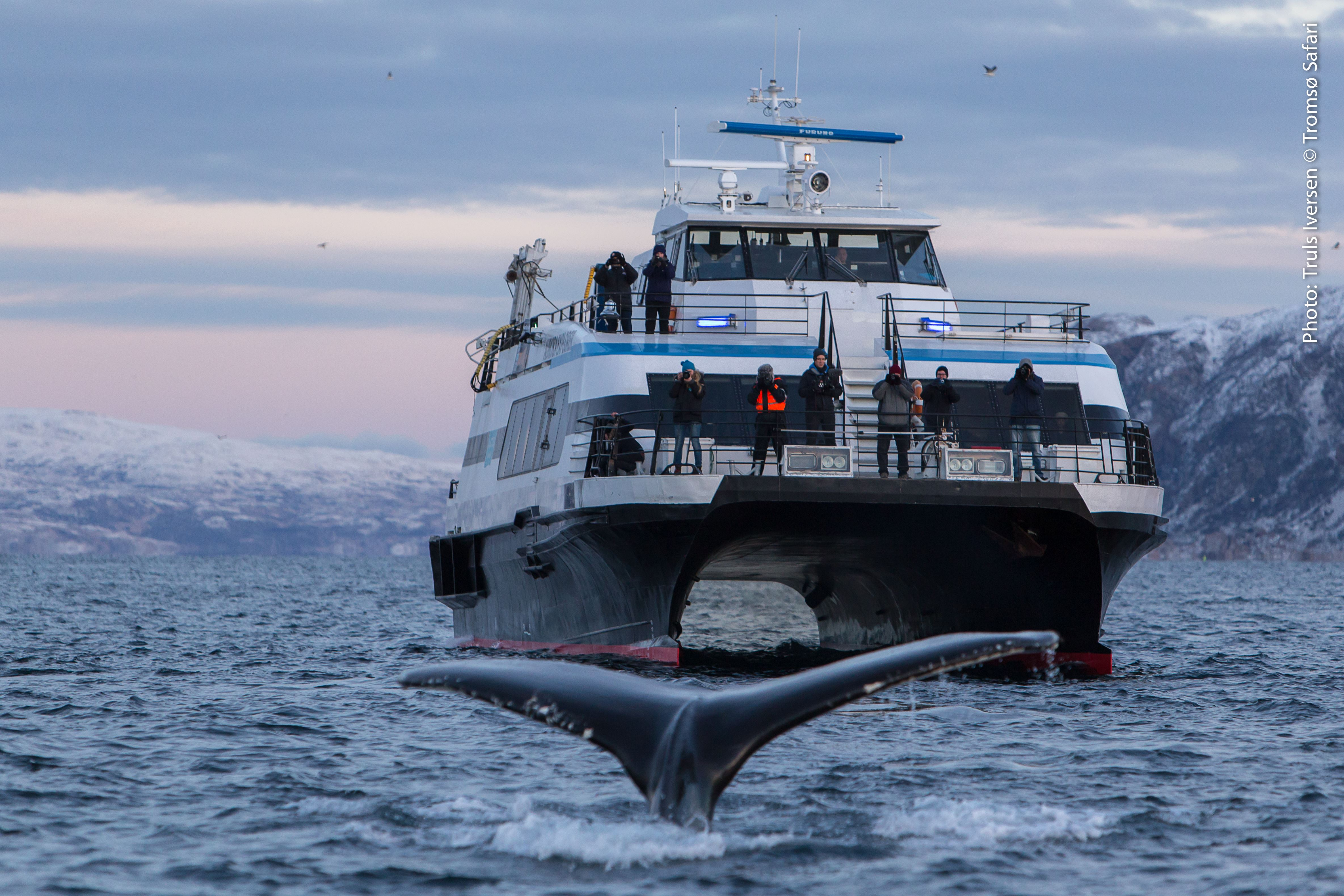 Whale Watching Cruise – Arctic Explorer