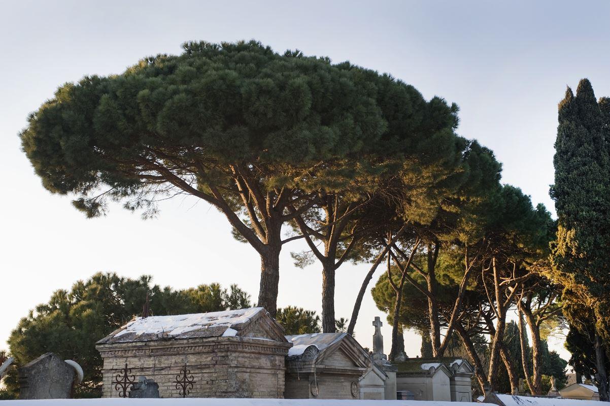 Le cimetière de Terre Cabade