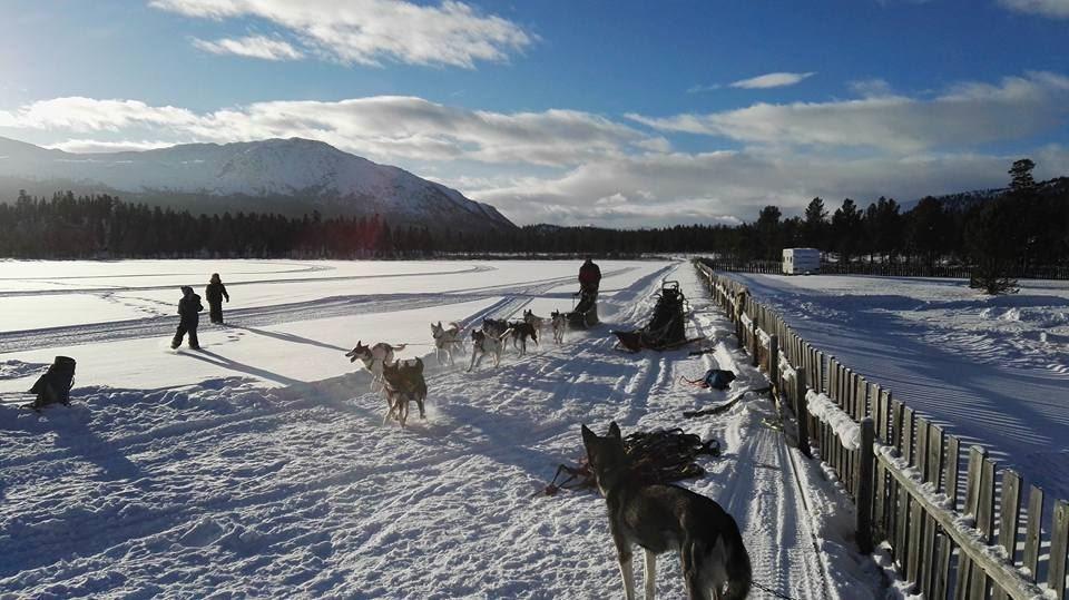 Hundekjøring i Sjodalen-Jotunheimen