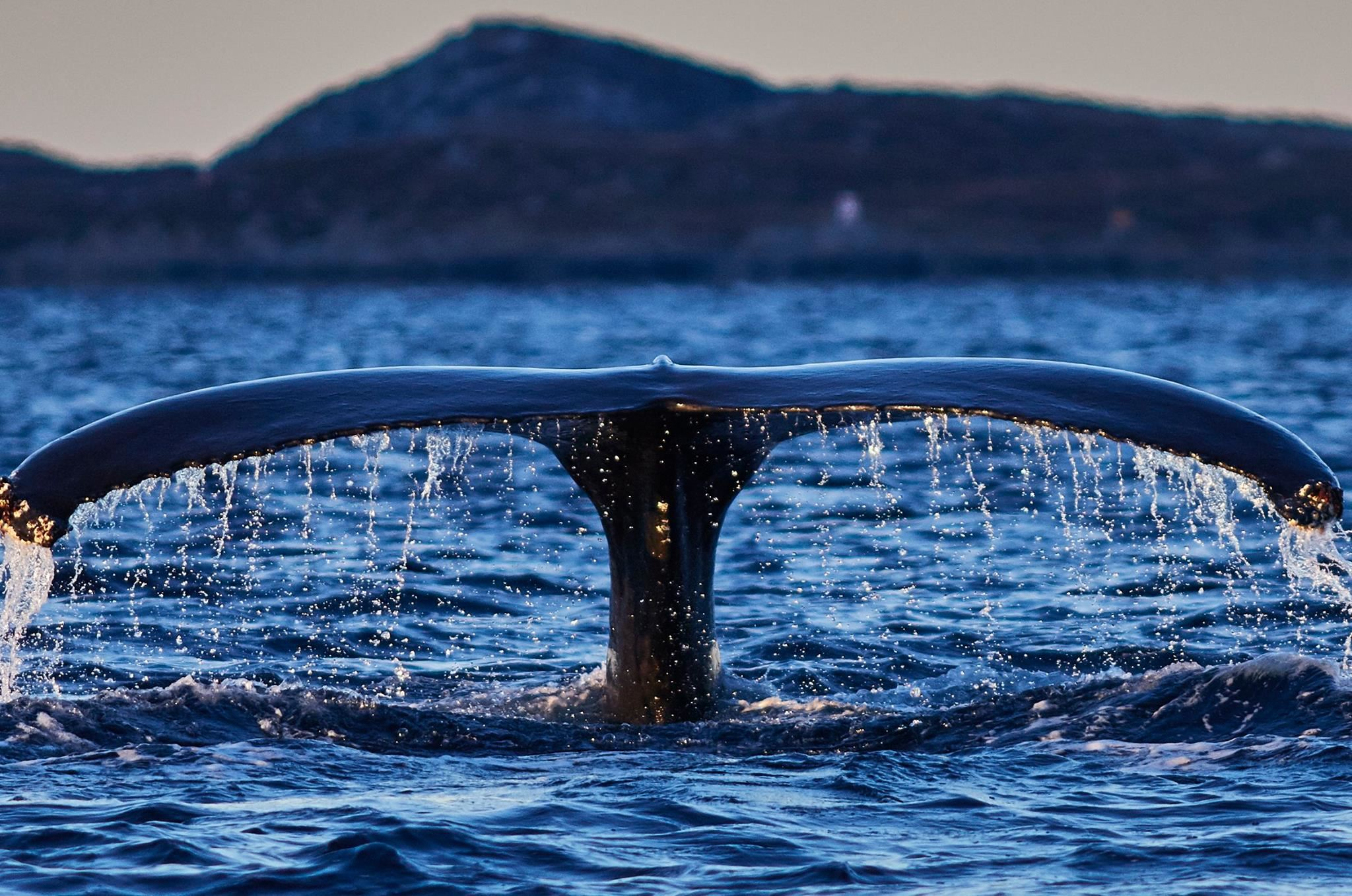 Scenic Whale Watching from our luxury Yacht Arctic Queen – Arctic Cruise in Norway