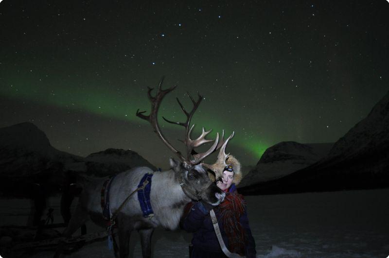 Northern Lights Reindeer Sledding Camp Tamok  - Lyngsfjord Adventure