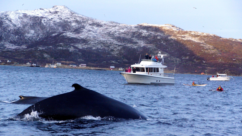 Unique whale waching - Arctic Breeze