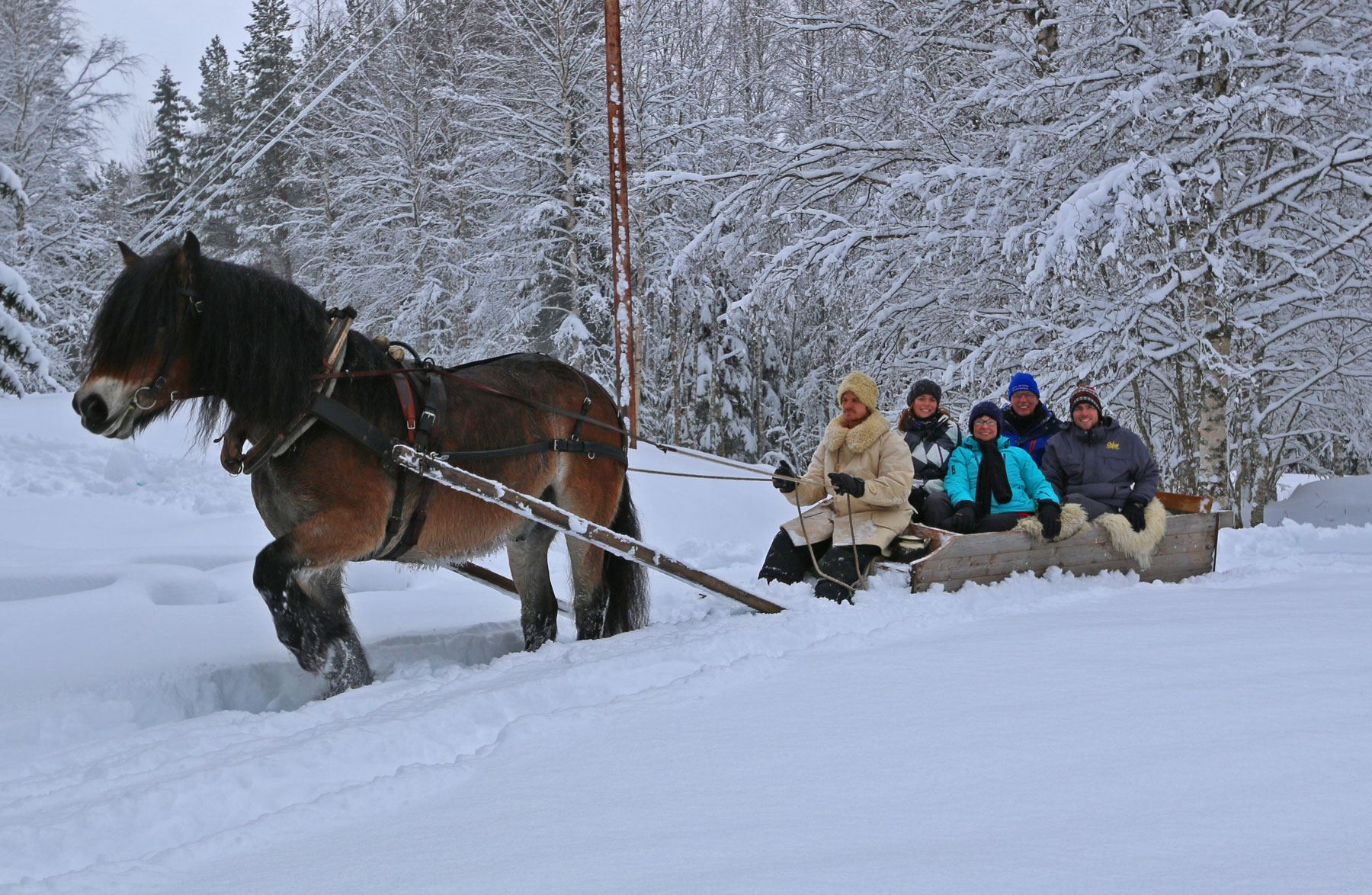 © Backfors Gård, Northern lights by horse and sleigh