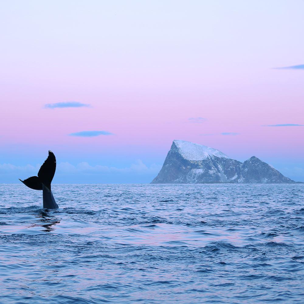 Vinter fjord cruise – Explore The Arctic