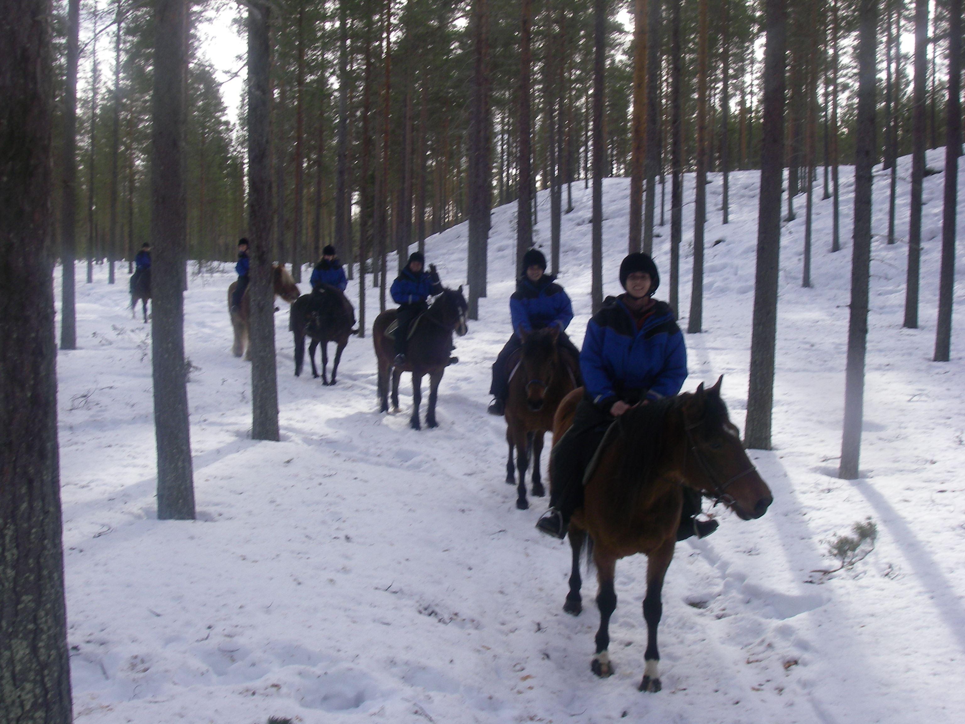 Riding in winter country with Enhörningens hästgård
