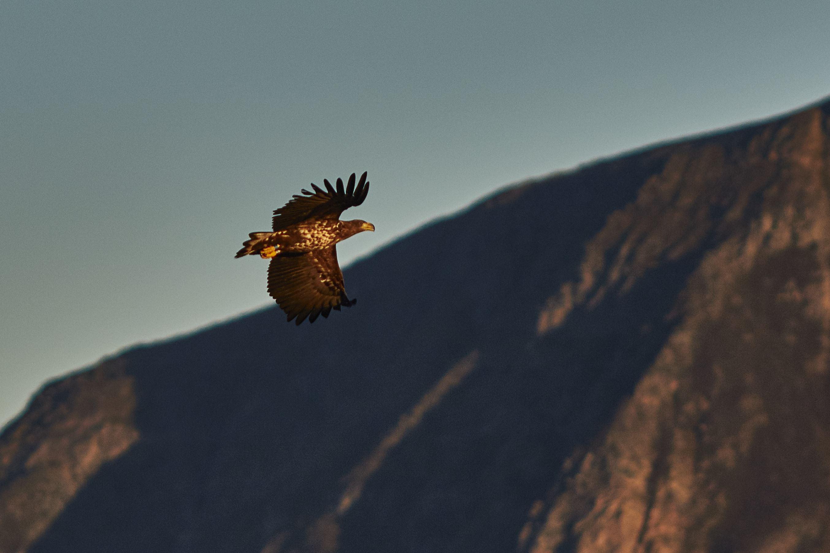 Nature & wildlife photo safari by Rib-boat - Green Gold of Norway