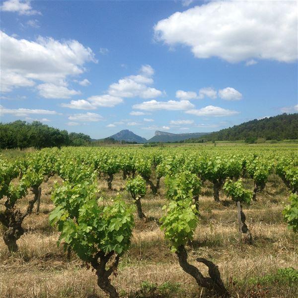 Bon cadeau excursion et wine tour avec Bertrand Bosc
