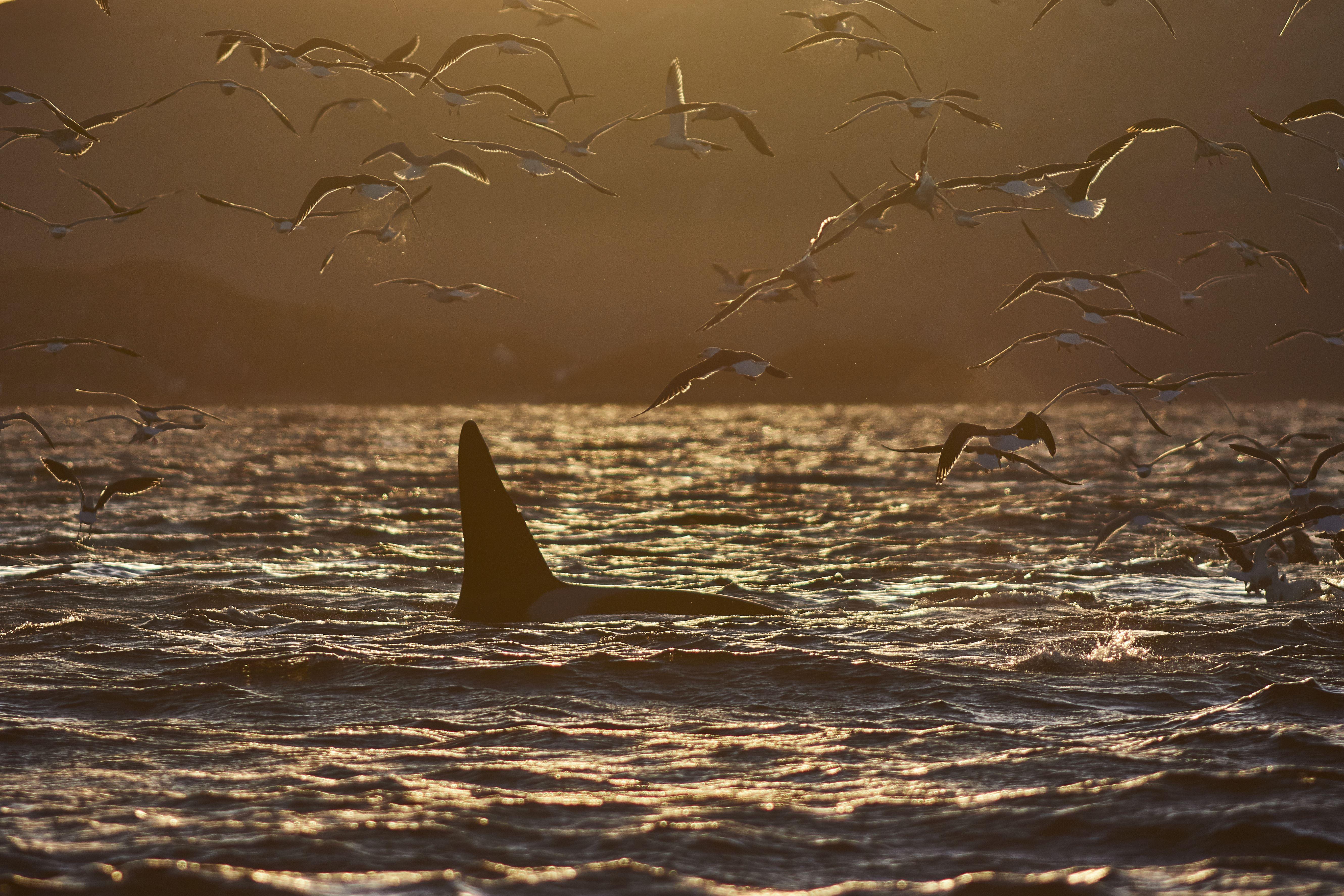 Midnight Sun photo safari by RIB - Green Gold of Norway
