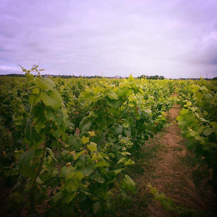 Visite du vignoble de Nantes - Muscadet Sèvre et Maine en minivan
