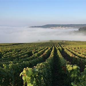 Journée complète en Champagne - 3 producteurs
