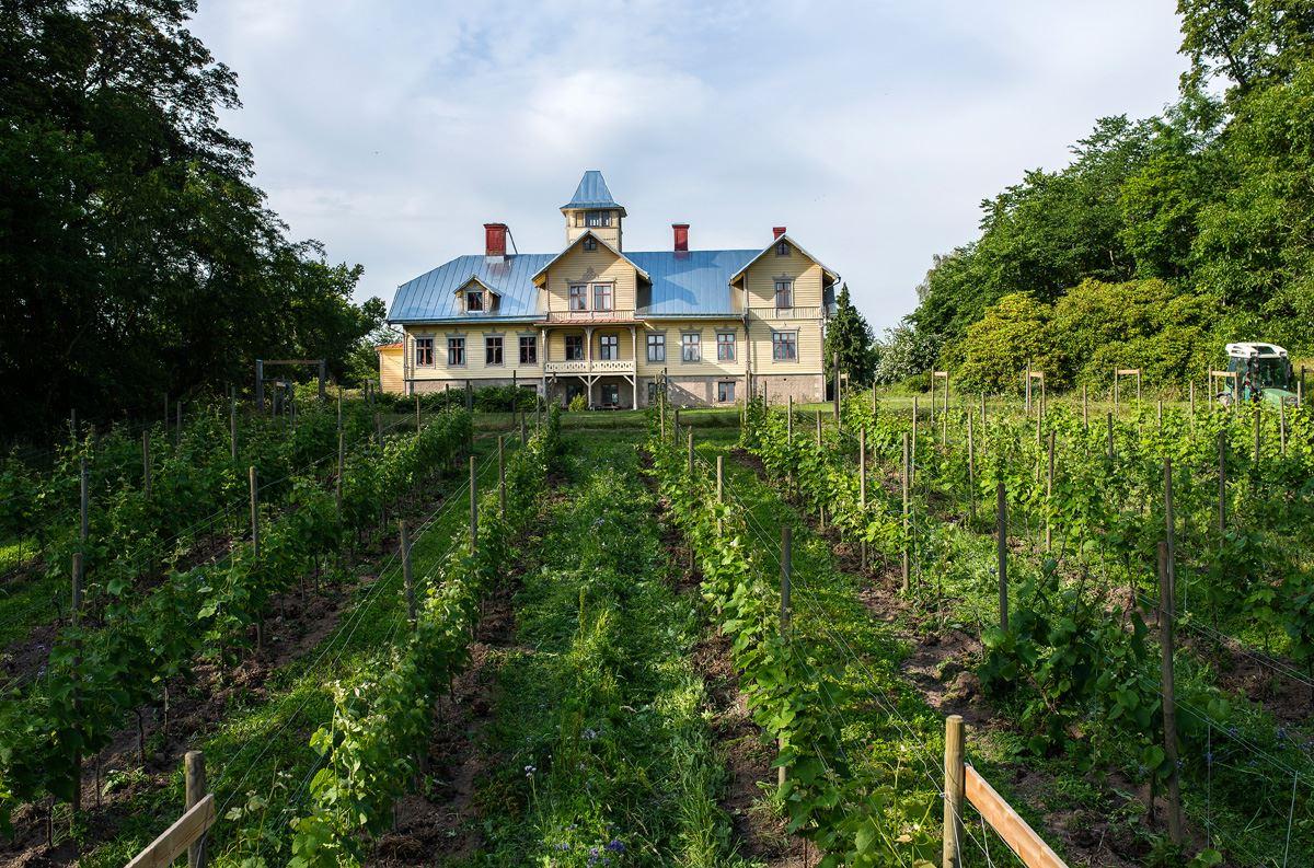 The vineyard Boråkra