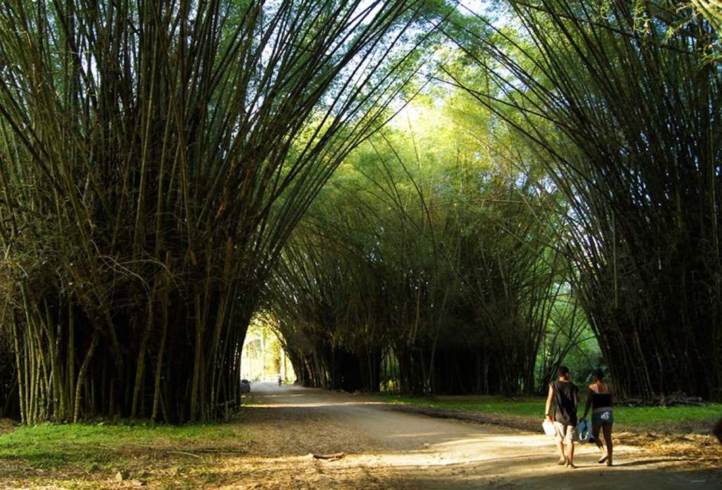Explore the Lancetilla Botanical Garden in Tela