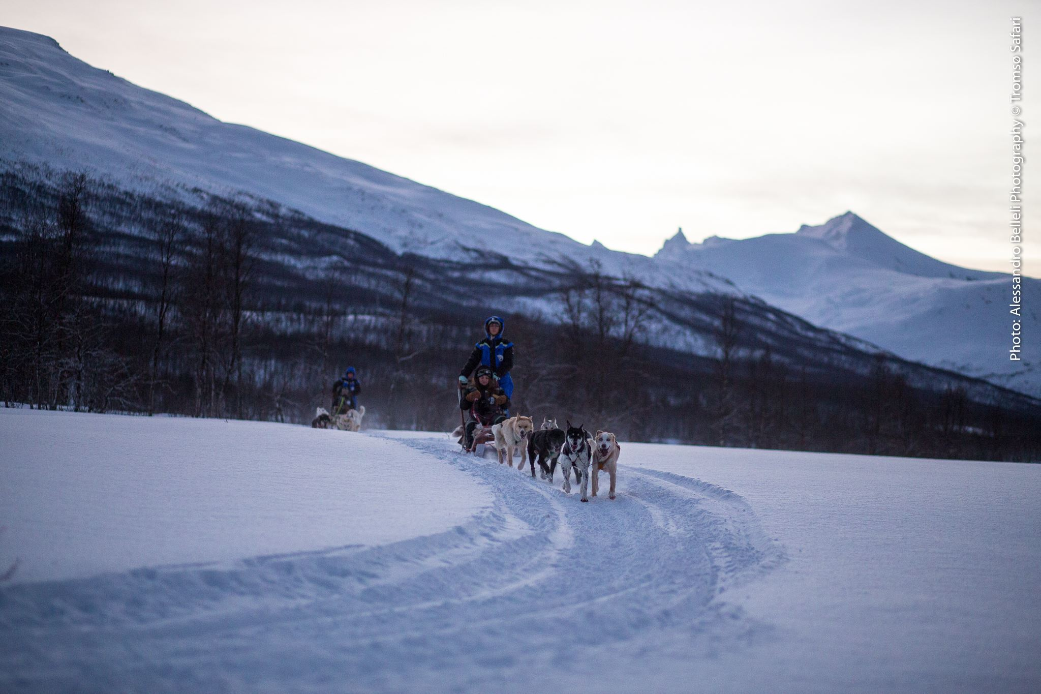 Husky Safari - Tromsø Safari