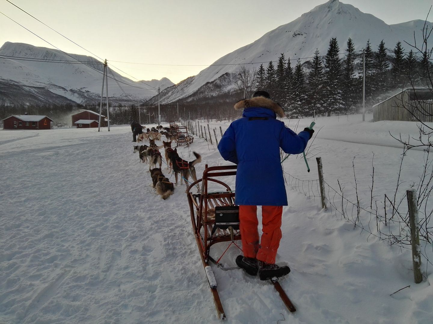 Be a musher for a day - Northern Light Dog Adventure