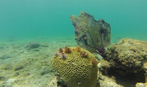 Buceo en Cayo Blanco 1 Immersion:(Favor de traer su tarjeta de certificación de buzo)