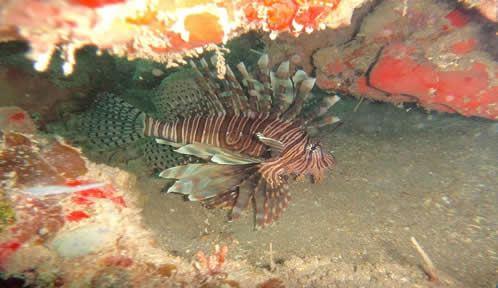 Snorkeling Cayo Blanco