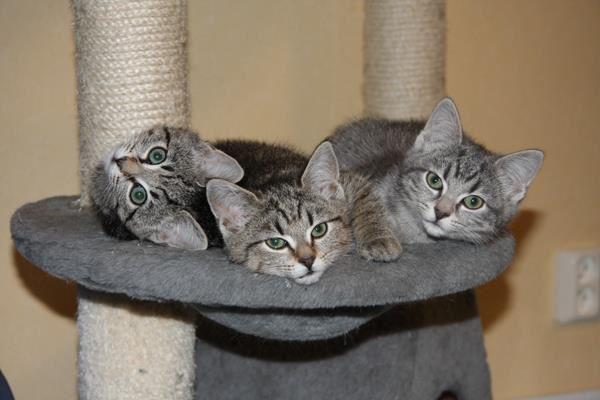 Öppet Hus i katthemmet