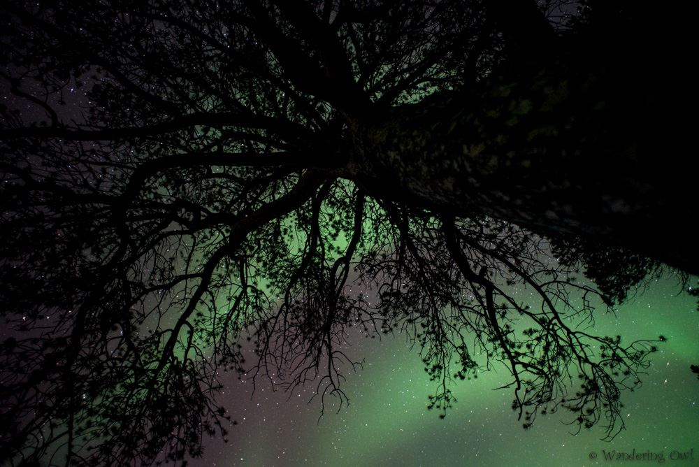 Aurora Hunt – All-inclusive - small-group Northern Lights chase - Wandering Owl