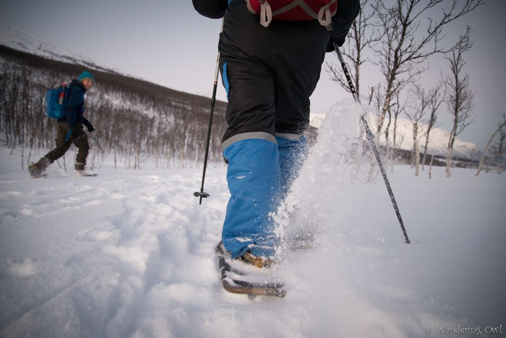 Take a walk on the wild side - All-inclusive snowshoeing tour - Wandering Owl