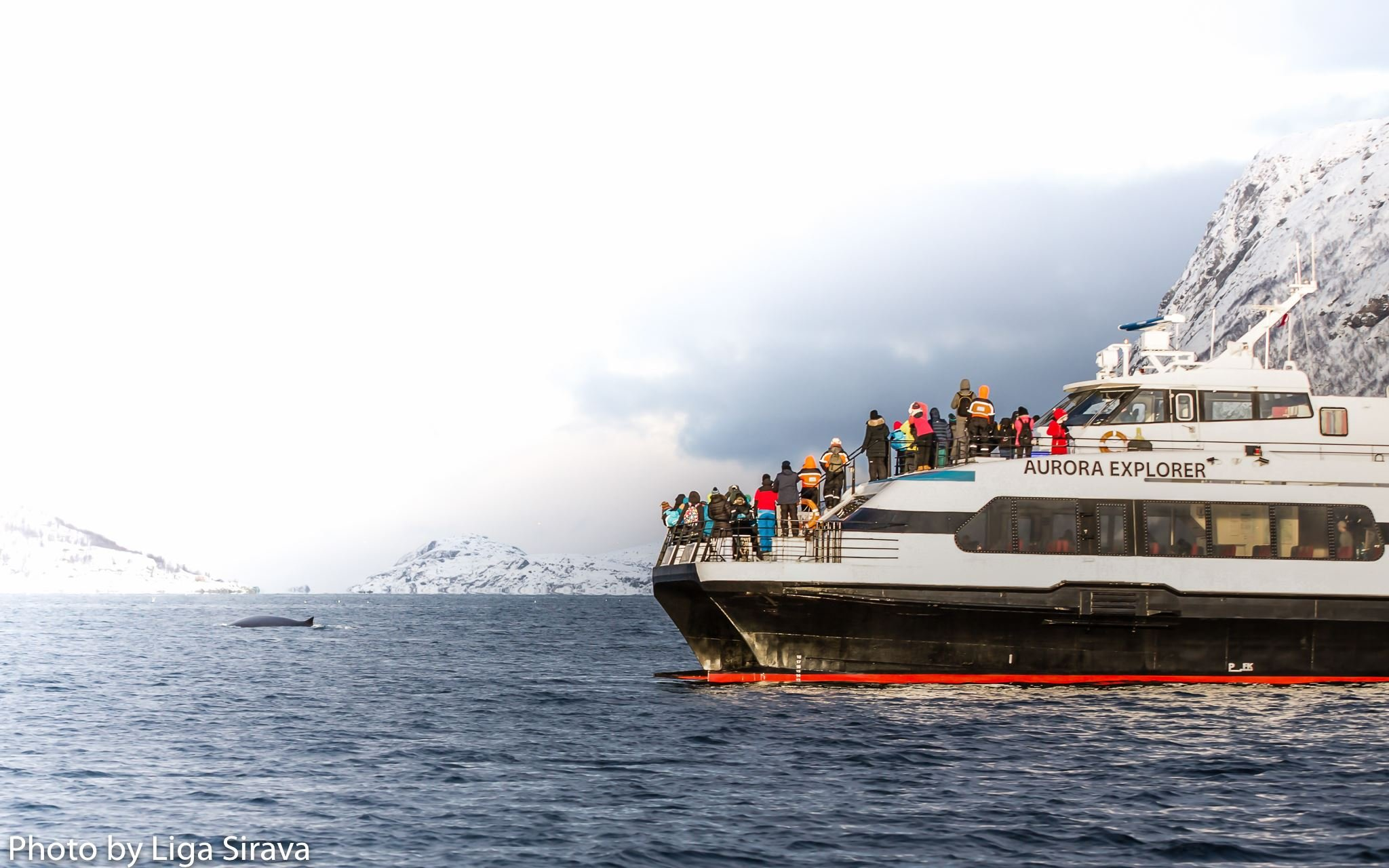 Whale Safari - Tromsø Safari