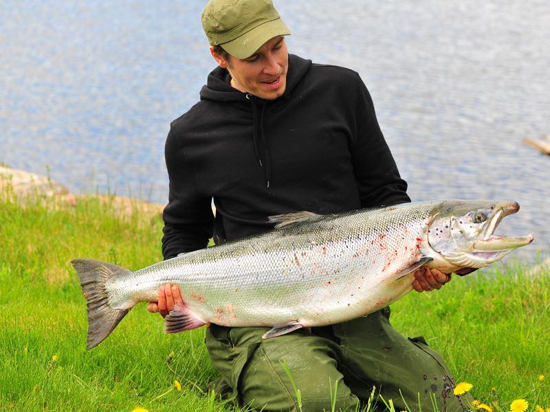 Salmon fishing in the river Ljusnan