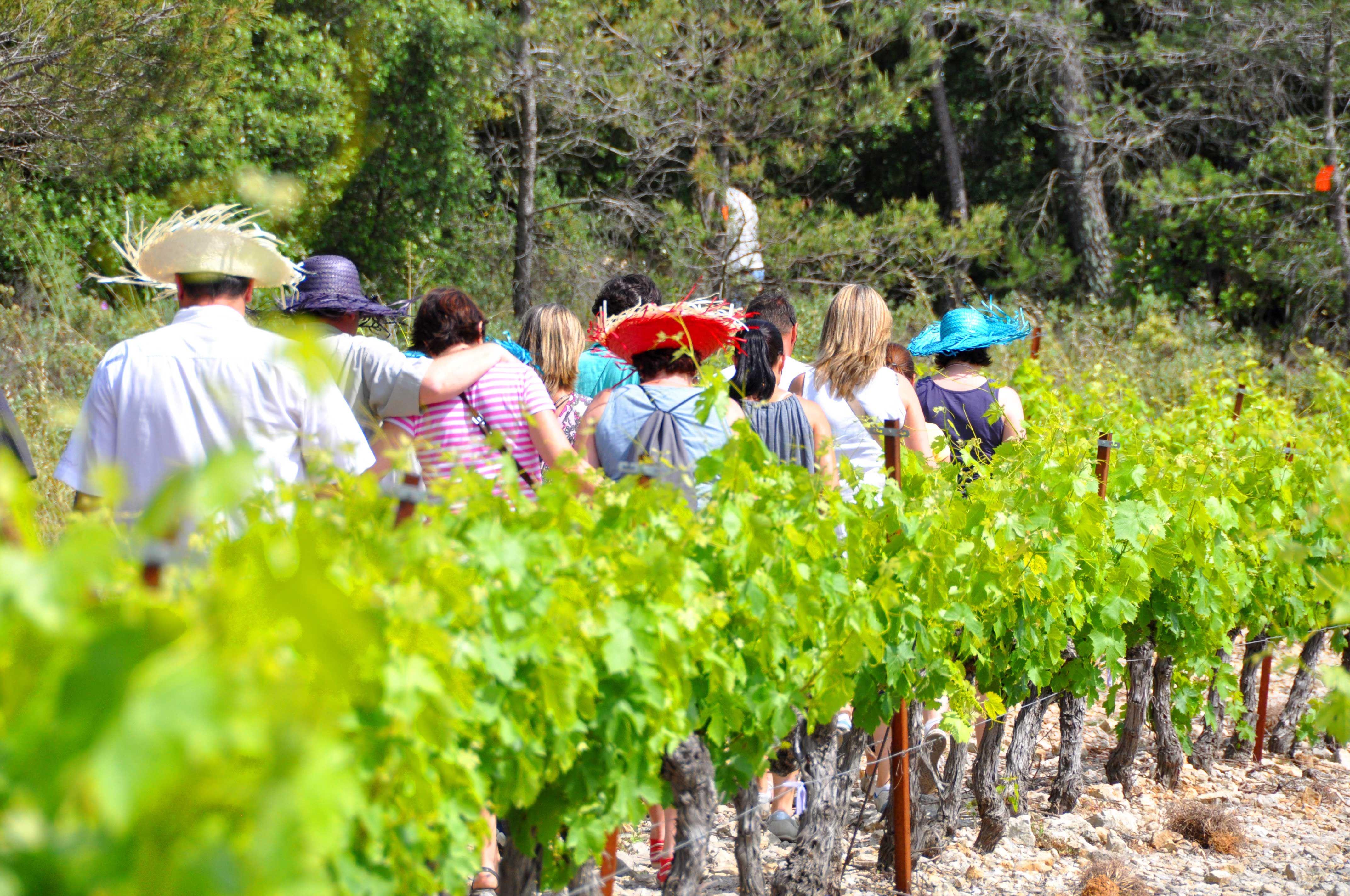 Château de Fourques : balade vigneronne au fil des saisons
