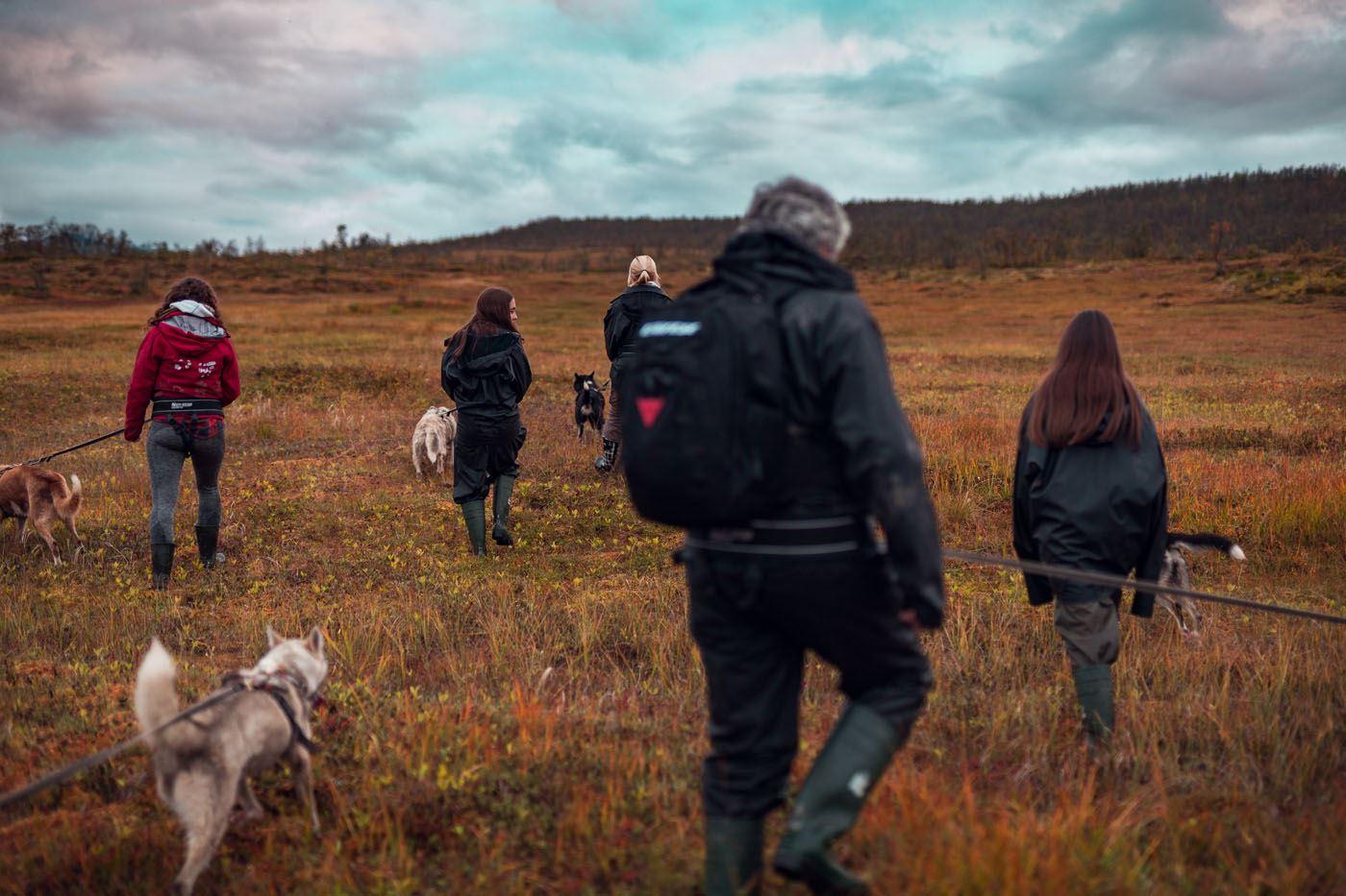 Nordlystur med Husky - Tromsø Villmarkssenter