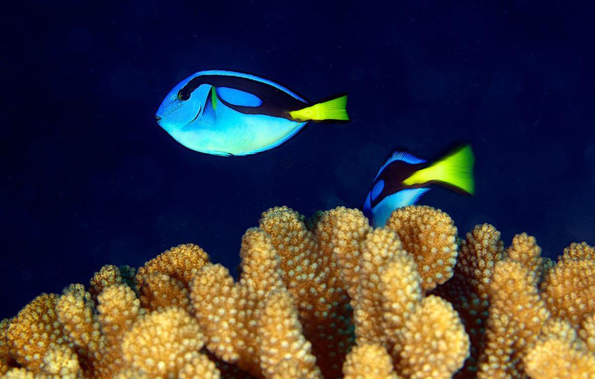 O Sea Bleu