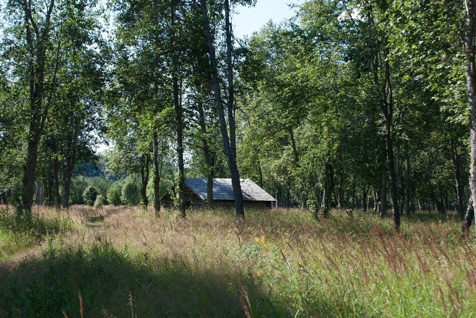 Slåtterdagar på Hummelholms slåtterängar