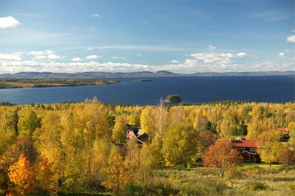 Utsikt över trädtoppar med höstlöv och sjön Siljan.