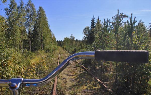Vy från en dressin med utsikt över rälsen som går genom skogen.