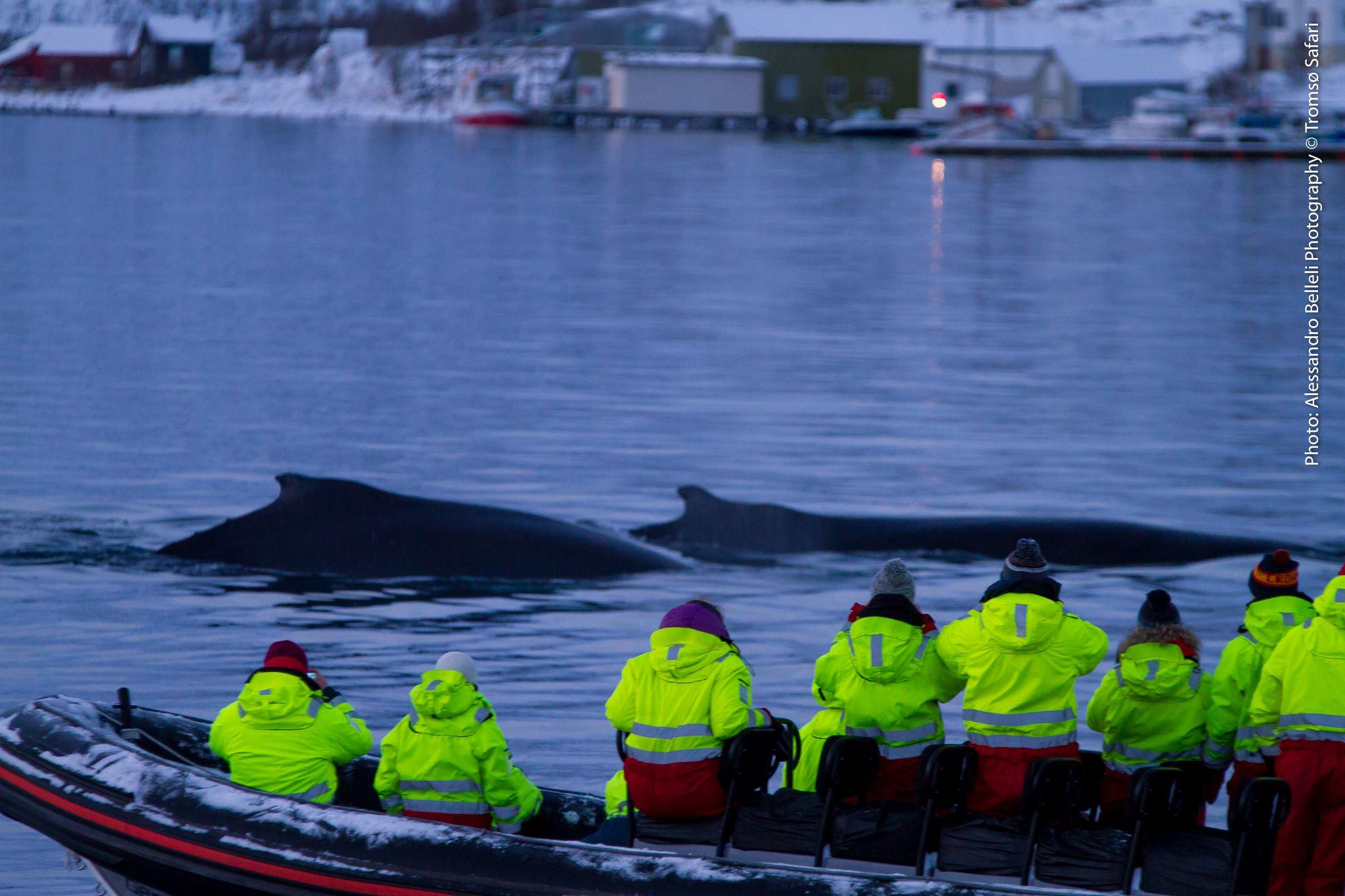 Whale Safari by RIB - Tromsø Safari