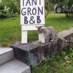 Grå katt bredvid skylt in till Tant Grön B&B.