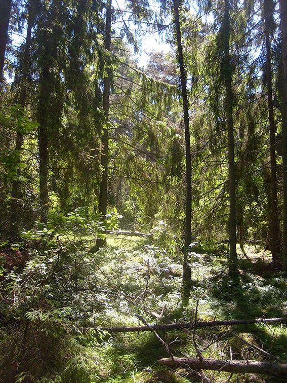 Tissel tassel i Trollskogen
