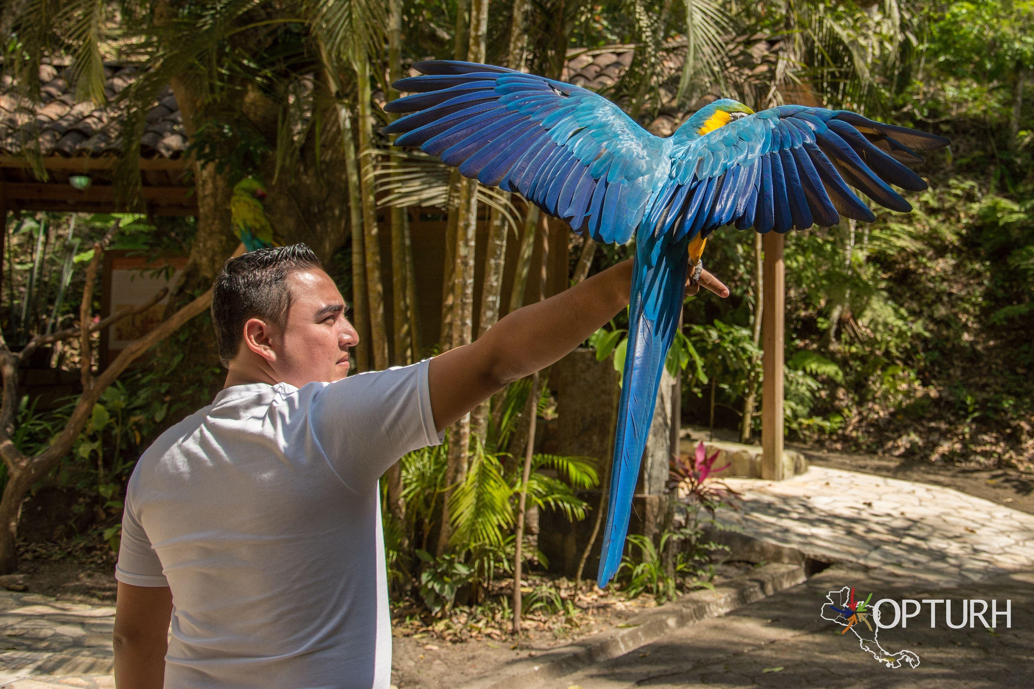 Macaw Mountain Bird Park in Copan