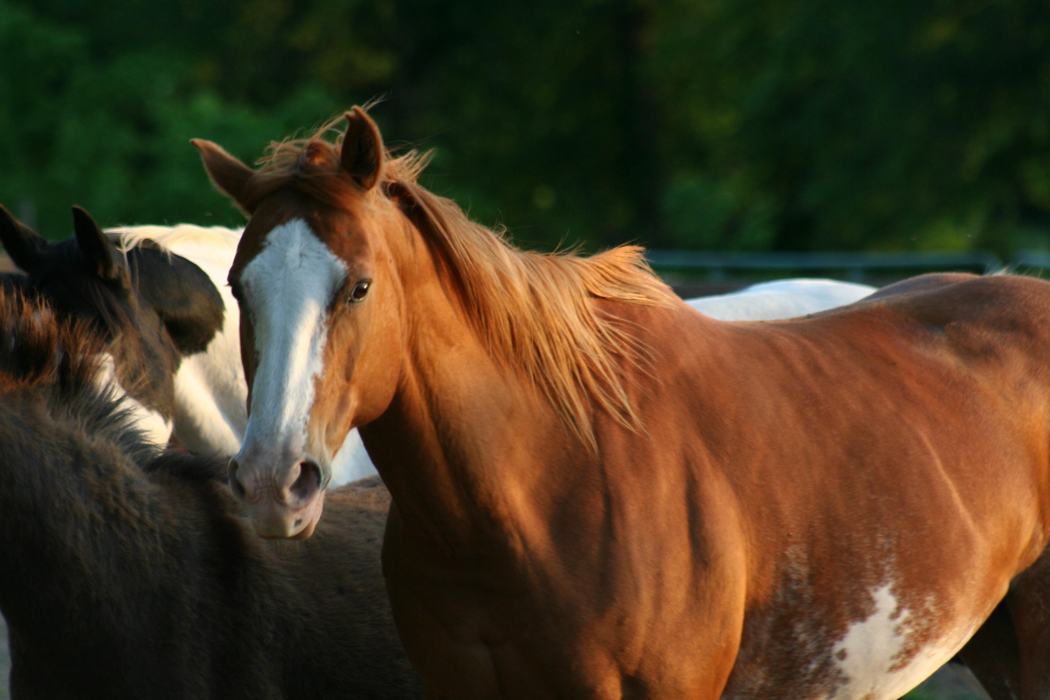 Hästhoppning: Pay & Jump