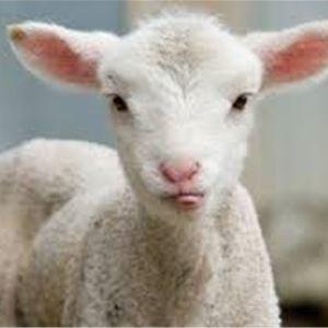 Visit the 4H Farm in Jomala