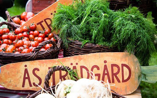 Foto: JHT,  © Copy: JHT, Tomater och dill