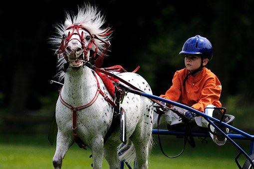Höstlov=Hästlov