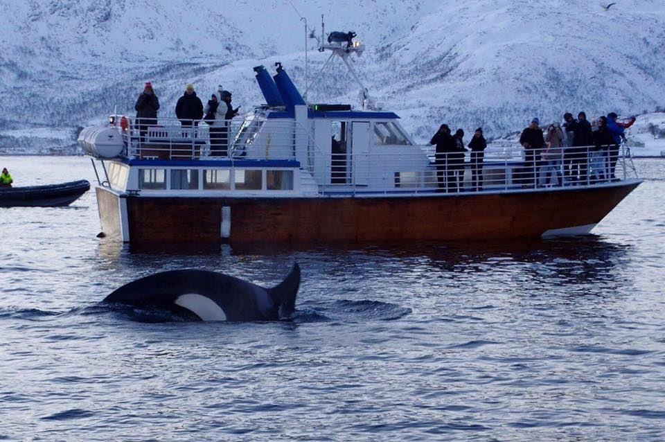 Hvalsafari på kanten av Tromsø – Aurora Alps