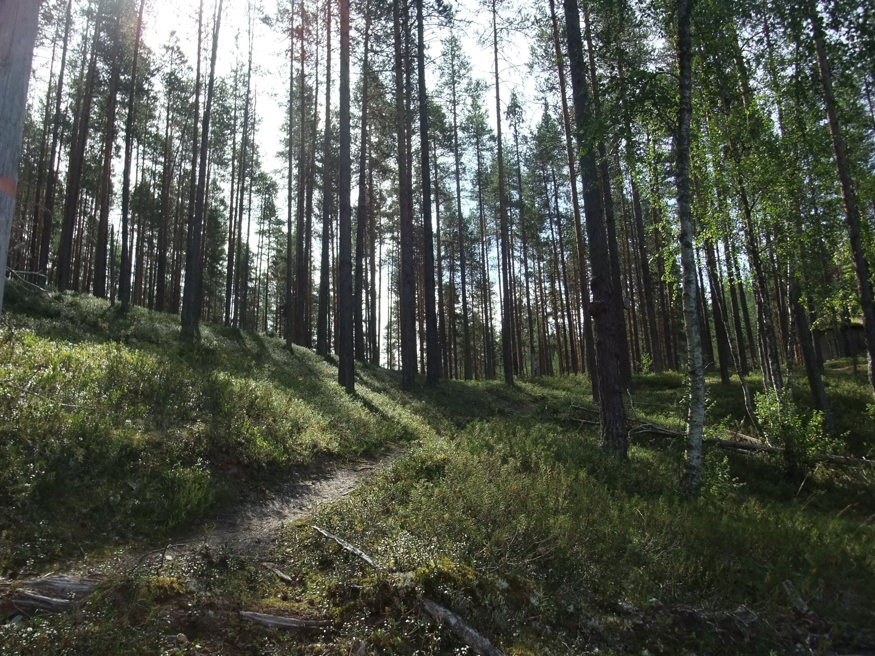The Isälvsleden Trail