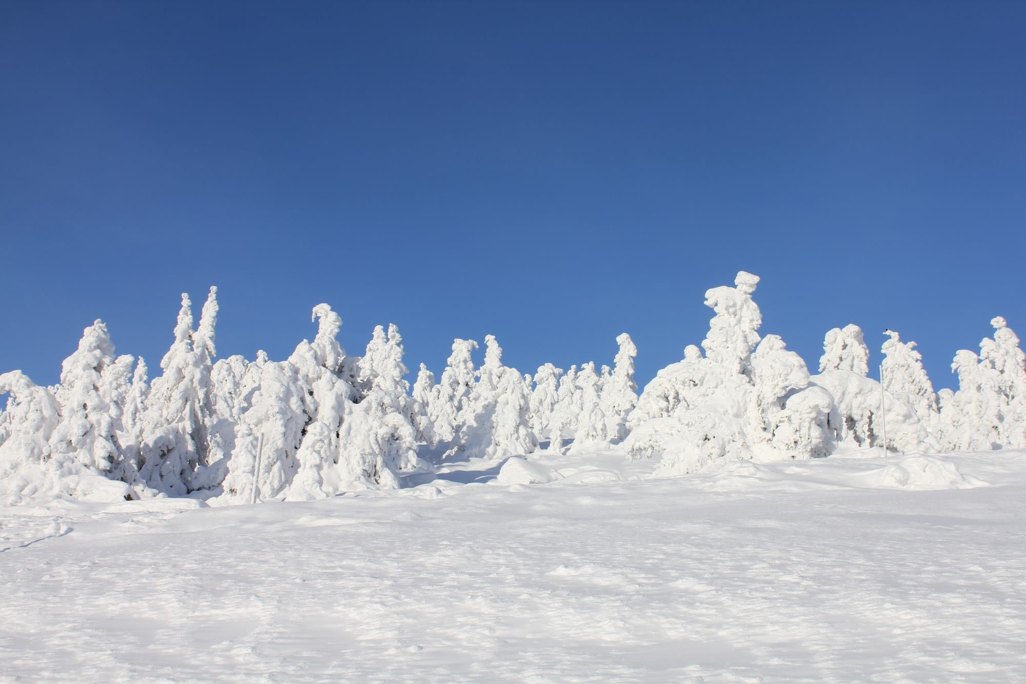 New Year in Hafjell