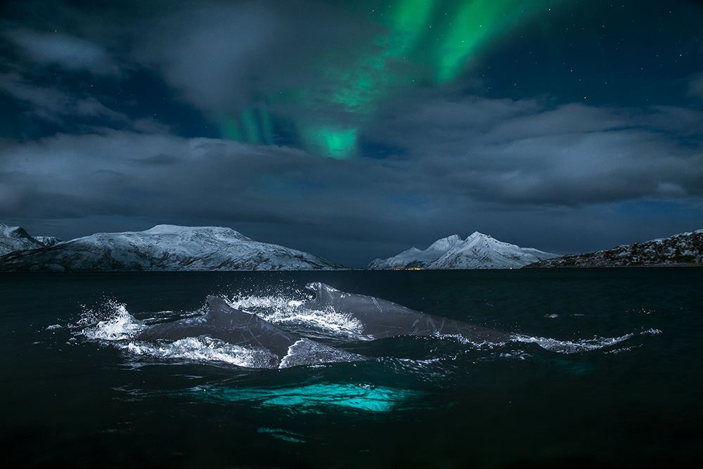 Northern Lights and Whale Watching On a Luxurious Yacht – Polar Yacht