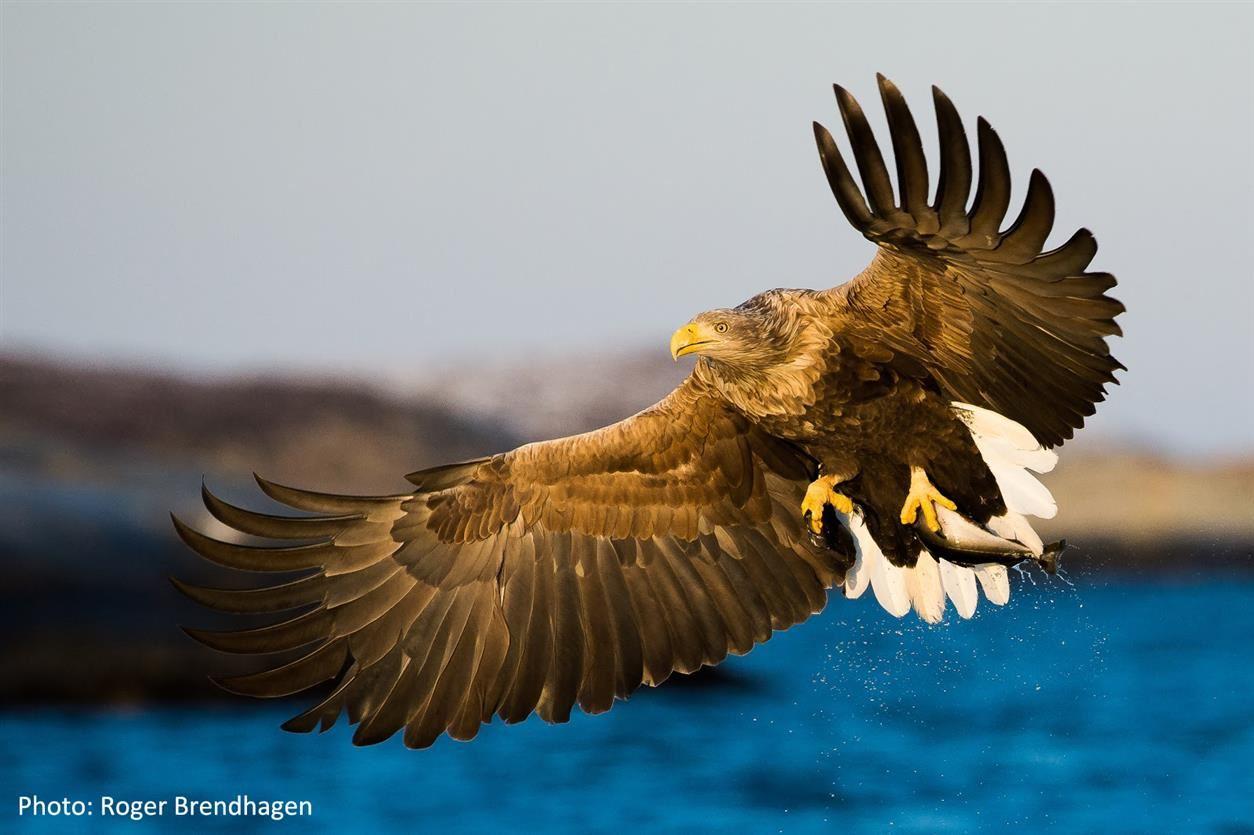 Wildlife Safari - MS Miljødronningen