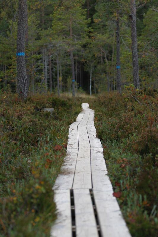 Petter Lämmås,  © Petter Lämmås, Grössjöns naturreservat