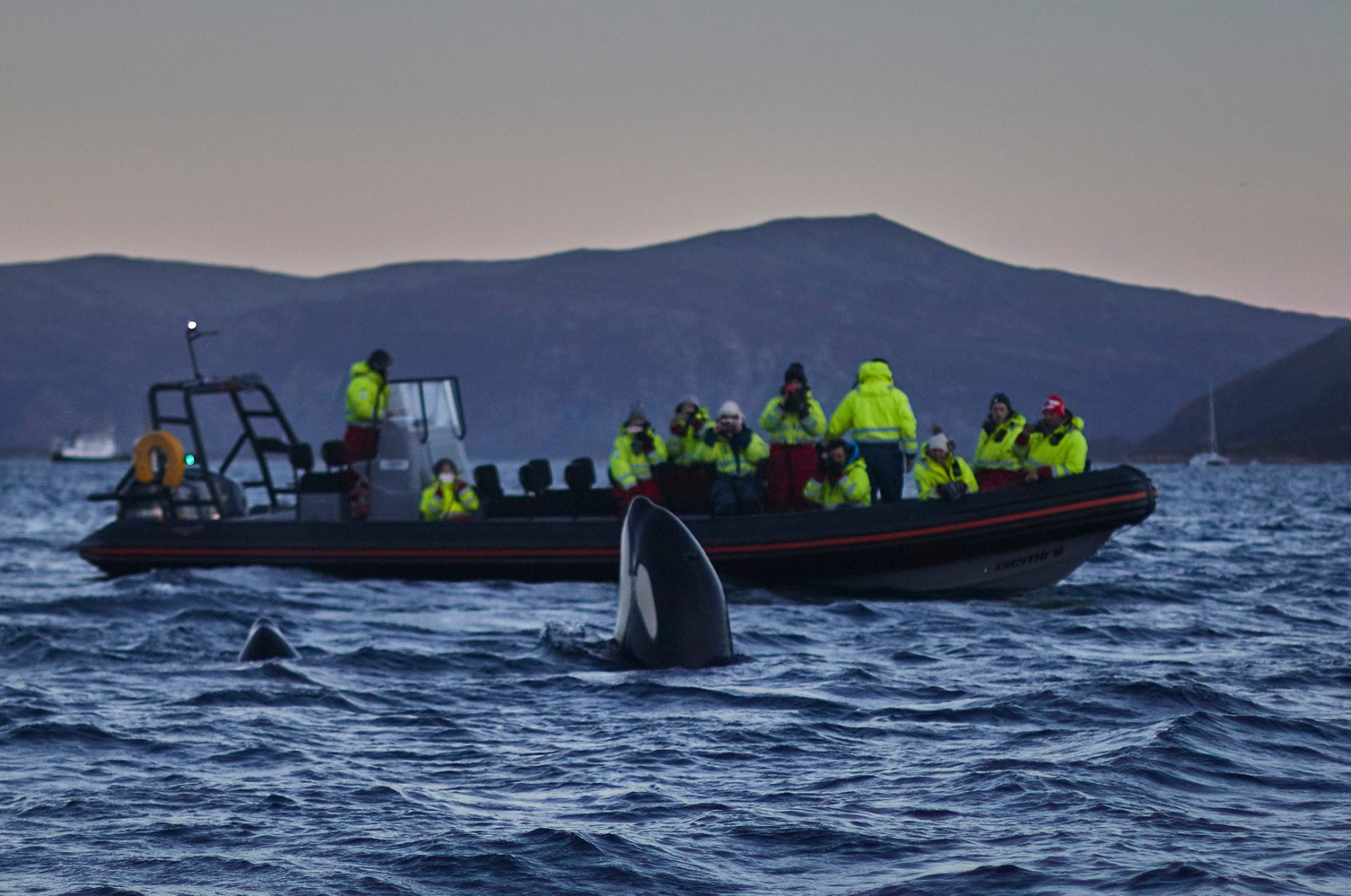 Whale watching in magical Skjervøy - Green Gold of Norway