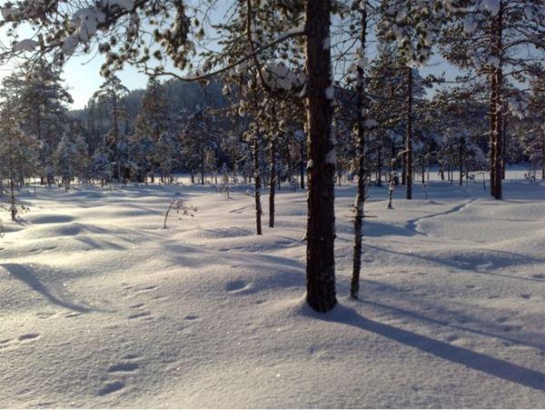 Det finns gott om vinteraktiviteter runtom Christingagården.
