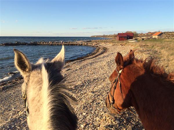 Highway 136 - Bo på hästgård